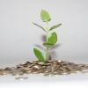 Grüne Geldanlagen: 4 Wege, um nachhaltig zu investieren